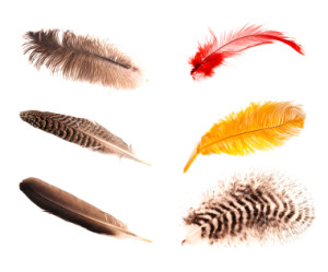 Enjoy and GIve  feathers